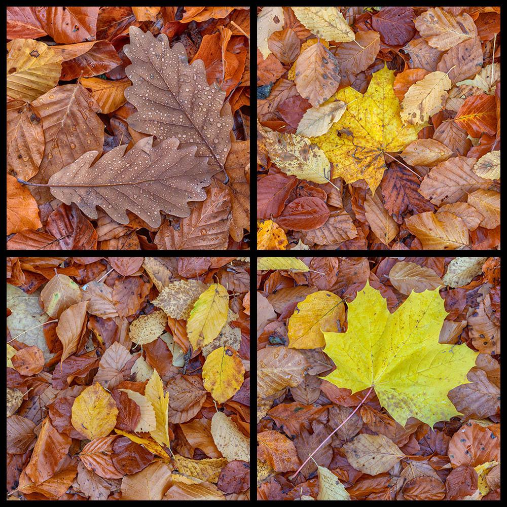 Nasses Herbstlaub