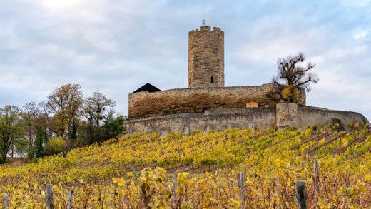 Burg Steinsberg und Weinberg im Herbst