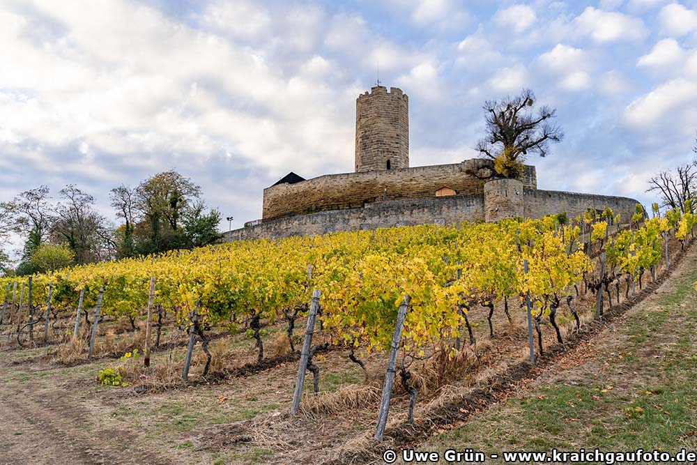 Burg Steinsberg mit herbstlichem Weinberg