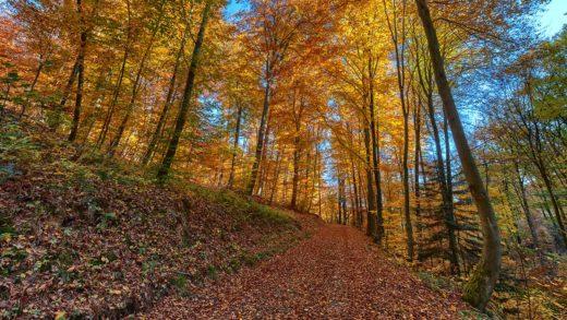 Herbstwald - Querformat