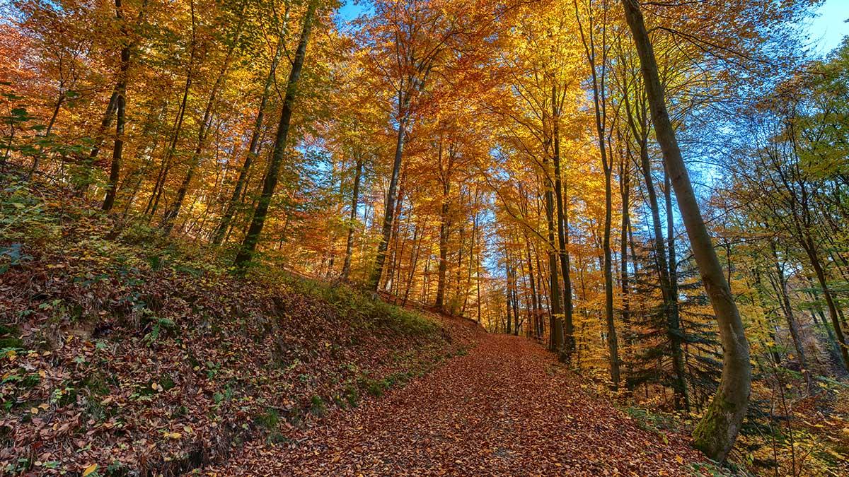 Herbst Teil 2 – Heidelberg Wald & Schloss