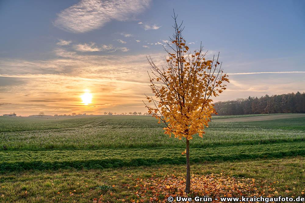Kurz vor Sonnenuntergang auf freiem Feld