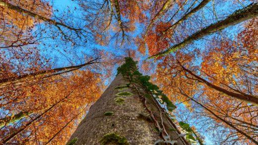 Herbstwald bei Neckarbischofsheim