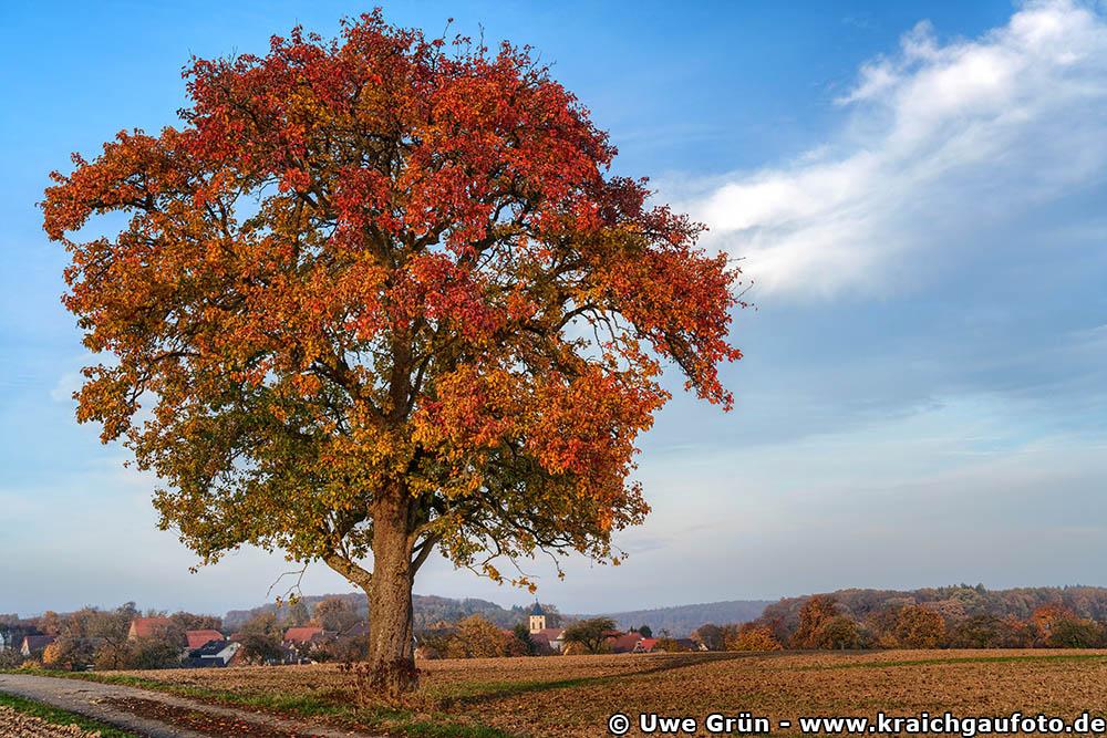 Alter Baum auf dem Feld