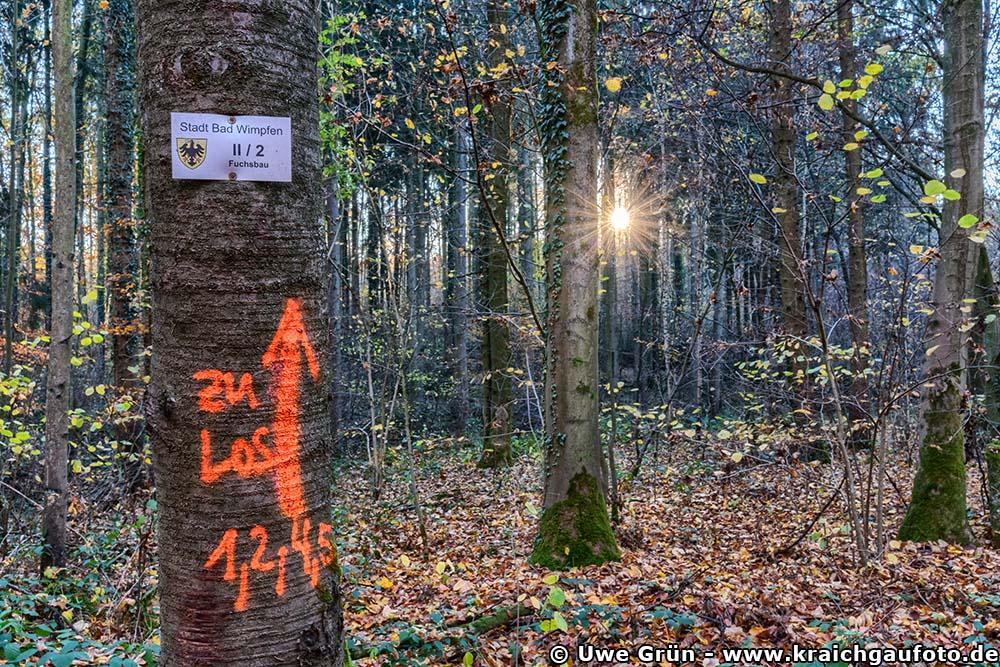 Herbstimpressionen aus dem Wald beim Salinenpark Bad Rappenau