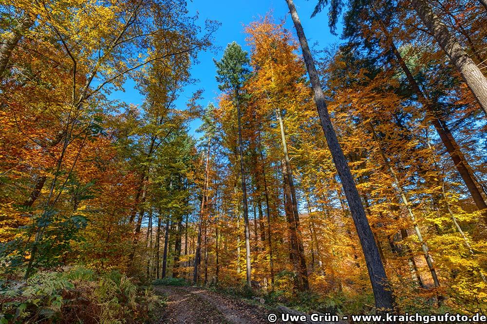 Herbstwald bei Waldhilsbach