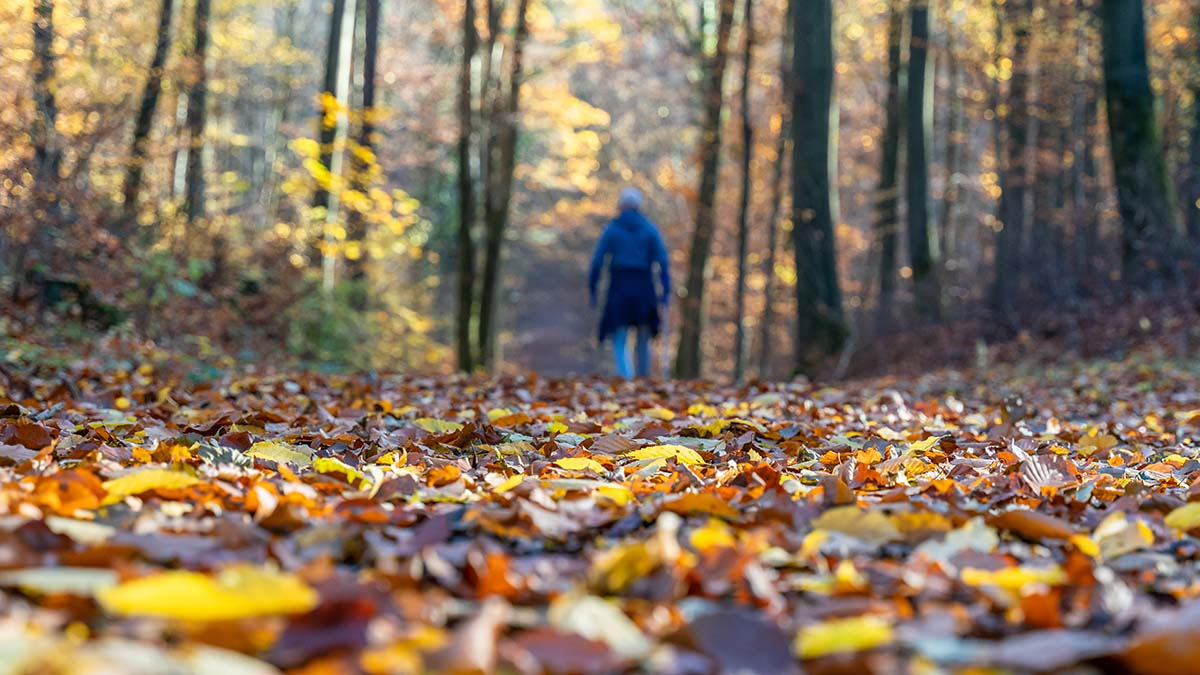 Herbst Teil 5 – Im Wald am Salinenpark Bad Rappenau